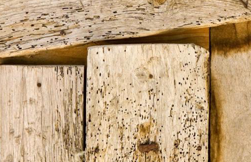 Timber covered in holes due to the impact of woodworms and woodbeetles